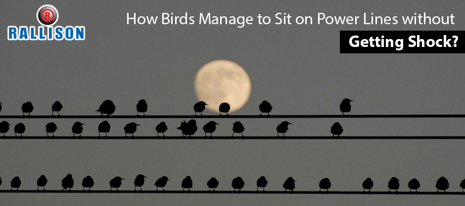 How Birds Manage to sit on Power lines without getting shock?